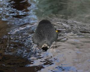 Penguin Paddle