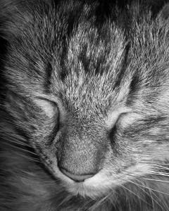 Pusscat